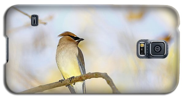 Cedar Waxwing On Yellow And Blue Galaxy S5 Case by Susan Gary
