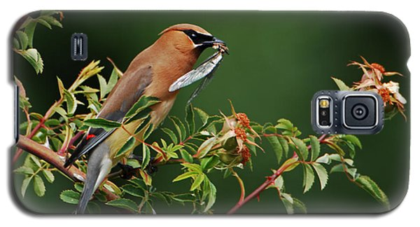Cedar Waxwing With A Bug Galaxy S5 Case