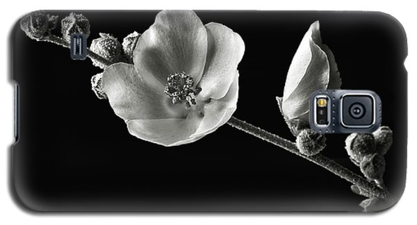 Galaxy S5 Case featuring the photograph Chaparral Mallow In Black And White by Endre Balogh