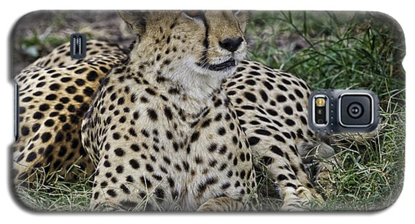 Cheetah Alert Galaxy S5 Case