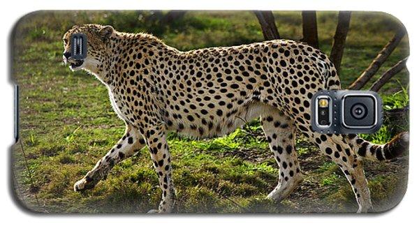 Cheetah  Galaxy S5 Case by Garry Gay