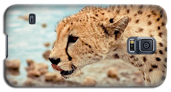 Cheetah Headshot Galaxy S5 Case by Darcy Michaelchuk