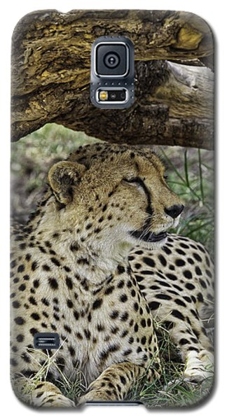 Cheetah Resting Galaxy S5 Case