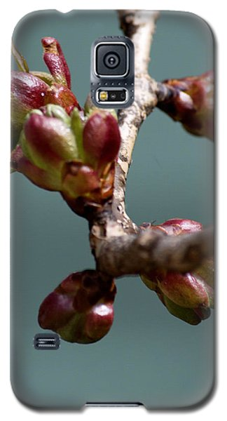 Cherry Blossom Number 4 Galaxy S5 Case