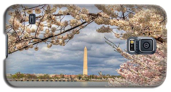 Cherry Blossoms Washington Dc 4 Galaxy S5 Case