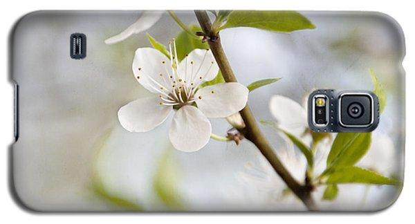 Cherry Tree Blossom Galaxy S5 Case by Agnieszka Kubica