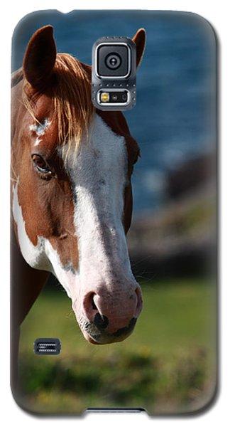 Chestnut Mare  Galaxy S5 Case