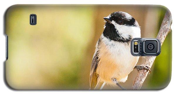 Chickadee Galaxy S5 Case by Cheryl Baxter