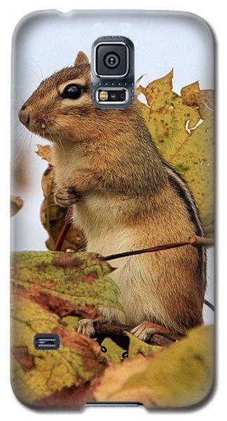 Chipmunk Galaxy S5 Case by Doris Potter