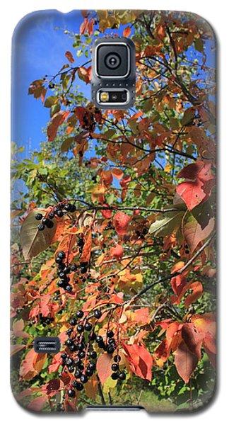 Chokecherry Tree Galaxy S5 Case by Jim Sauchyn