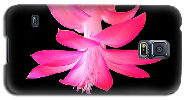 Galaxy S5 Case featuring the photograph Christmas Cactus by Steven Clipperton
