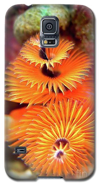 Christmas Tree Worm Galaxy S5 Case by Joerg Lingnau