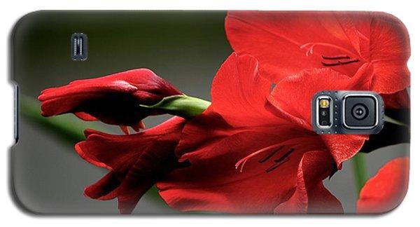 Chromatic Gladiola Galaxy S5 Case
