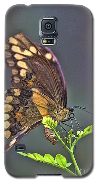 Galaxy S5 Case featuring the photograph Circle Of Life by Anne Rodkin
