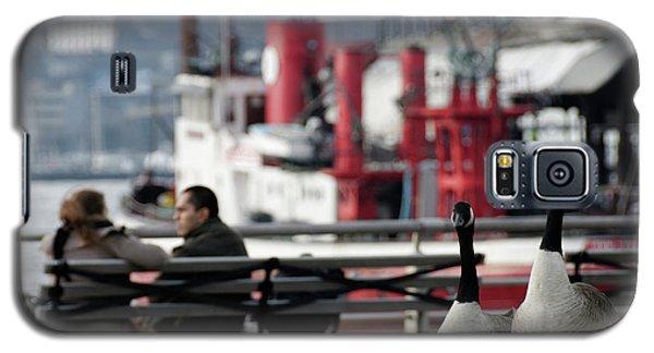 City Geese Galaxy S5 Case