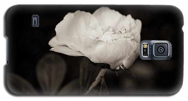 Galaxy S5 Case featuring the photograph Classic Peony by Sara Frank