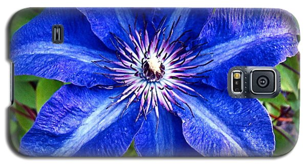 Galaxy S5 Case featuring the photograph Clematis by Nick Kloepping