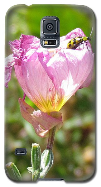 Galaxy S5 Case featuring the photograph Climbing The Mexican Evening Primrose by Bonnie Muir