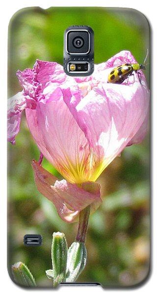 Climbing The Mexican Evening Primrose Galaxy S5 Case by Bonnie Muir