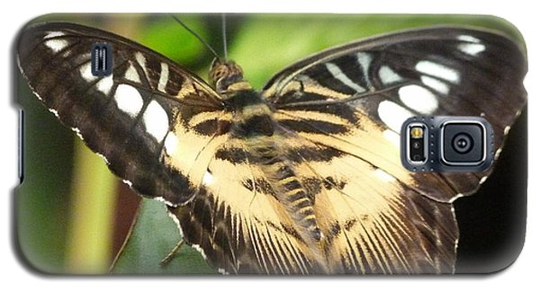 Galaxy S5 Case featuring the photograph Clipper Butterfly by Lynn Bolt