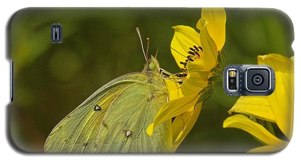 Clouded Sulphur Butterfly Din099 Galaxy S5 Case