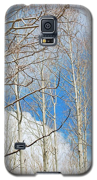 Cloudy Aspen Sky Galaxy S5 Case
