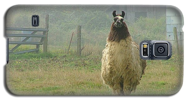 Galaxy S5 Case featuring the photograph Coast Llama by Wendy McKennon