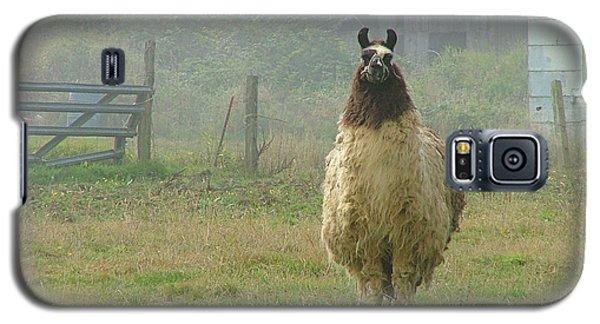 Coast Llama Galaxy S5 Case by Wendy McKennon