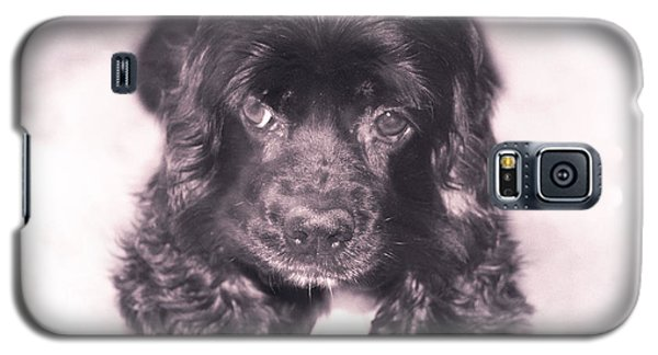 Galaxy S5 Case featuring the photograph Cocker Spaniel by Janie Johnson