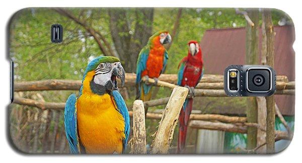 Color Of Parrots  Galaxy S5 Case