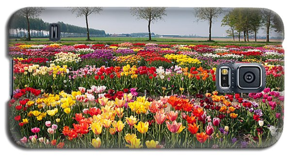 Galaxy S5 Case featuring the photograph Colorful Tulips by Hans Engbers