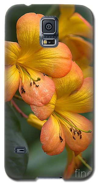 Galaxy S5 Case featuring the photograph Colors Of The Sunset Sky by Anne Rodkin