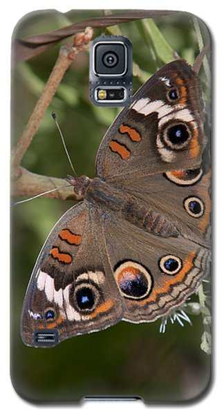 Common Buckeye Butterfly Din182 Galaxy S5 Case