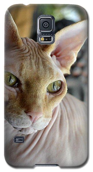 Contemplative Sphynx Galaxy S5 Case