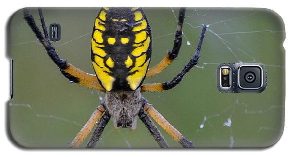Galaxy S5 Case featuring the photograph Corn Spider by Brian Stevens