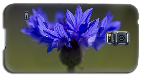 Galaxy S5 Case featuring the photograph Cornflower Blue by Clare Bambers