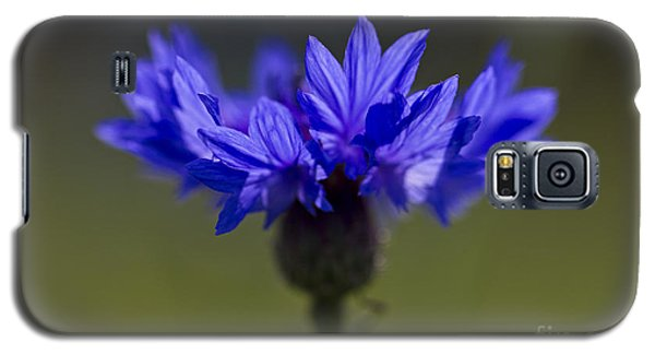 Cornflower Blue Galaxy S5 Case by Clare Bambers