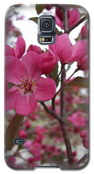 Crabapple Pink Galaxy S5 Case by Rebecca Overton