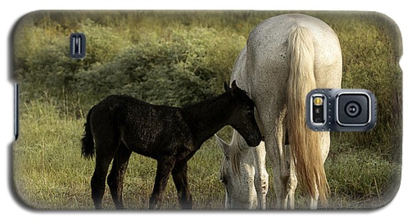Cracker Foal And Mare Galaxy S5 Case