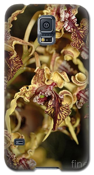 Galaxy S5 Case featuring the photograph Crazy Curly Orchid by Eva Kaufman