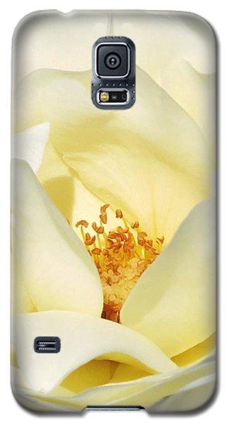 Cream Rose  Galaxy S5 Case by Rebecca Overton