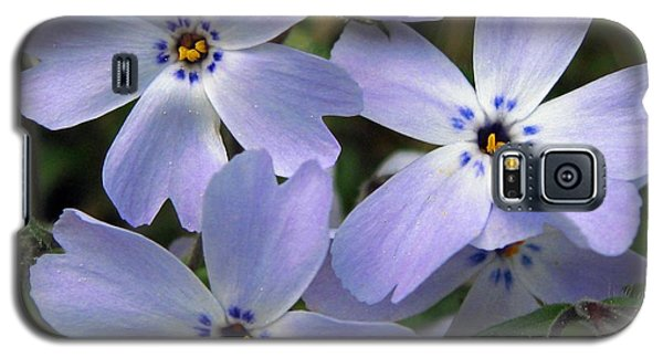 Galaxy S5 Case featuring the photograph Creeping Phlox by J McCombie