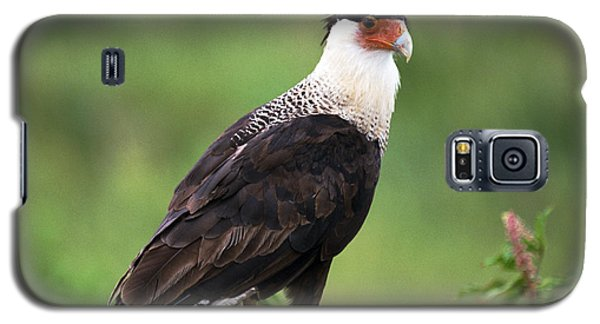 Galaxy S5 Case featuring the photograph Crested Caracara by Bradford Martin