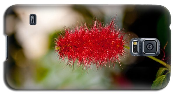 Galaxy S5 Case featuring the photograph Crimson Bottle Brush by Tikvah's Hope