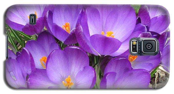 Crocus Galaxy S5 Case