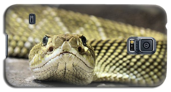 Crotalus Basiliscus Galaxy S5 Case by JC Findley