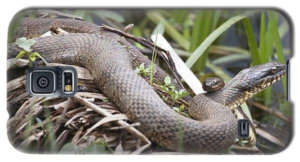 Cuddling Snakes Galaxy S5 Case by Jeannette Hunt