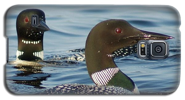 Galaxy S5 Case featuring the photograph Curious Loons by Steven Clipperton