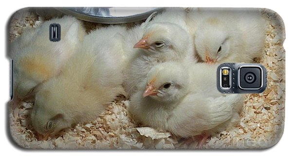 Cute And Fuzzy Chicks Galaxy S5 Case by Chalet Roome-Rigdon