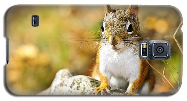 Cute Red Squirrel Closeup Galaxy S5 Case